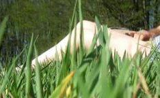 Comendo mulher madura na grama