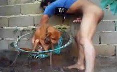 Tarado pegando sua cadelinha no quintal